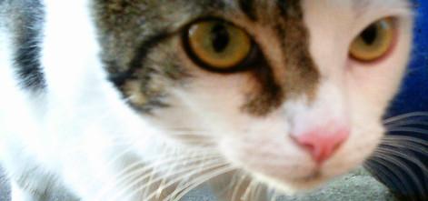 Zweifarbige Katze schaut in die Kamera